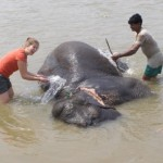 Giving an elephant a morning bath at Chitwan