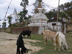 Stupa and Goats