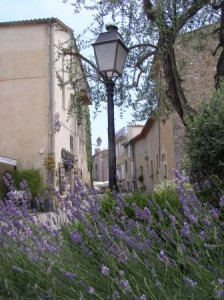 Lavender at Mougins