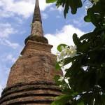 Frangipanis in full bloom at Sukhothai