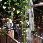 Jioufen Tea House