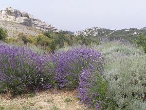 Lavender at Les Baux-de-Provence