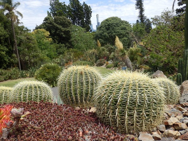 Cacti at the Melbourne Botanical Gardens