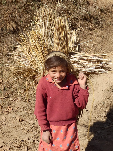Nepali girl carrying hay