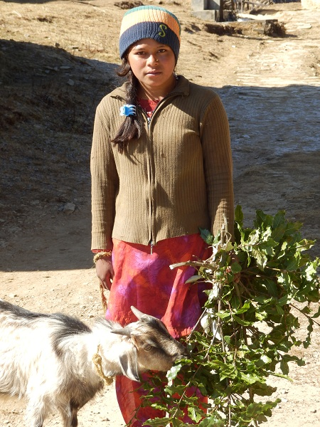 A nepali girl feeding her goat.
