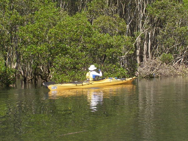 Man kayaking in Mangroves at Middle Harbour
