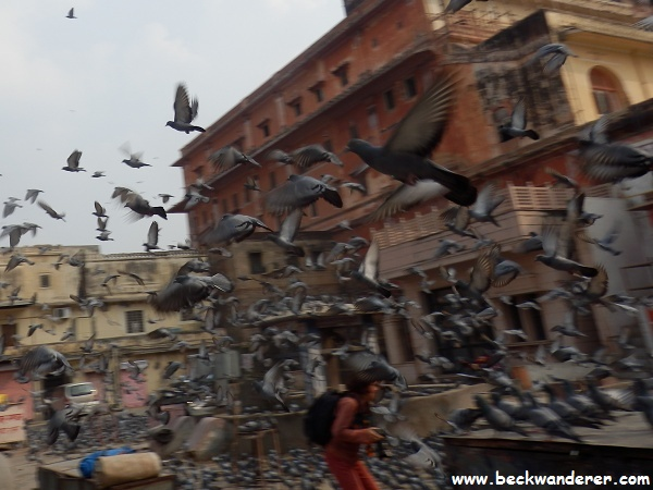 Thousands of pigeons outside the palace