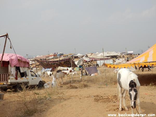Horses at the Pushkar Camel Fair