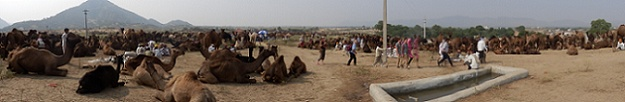 Pushkar Camel Fair Panoramic