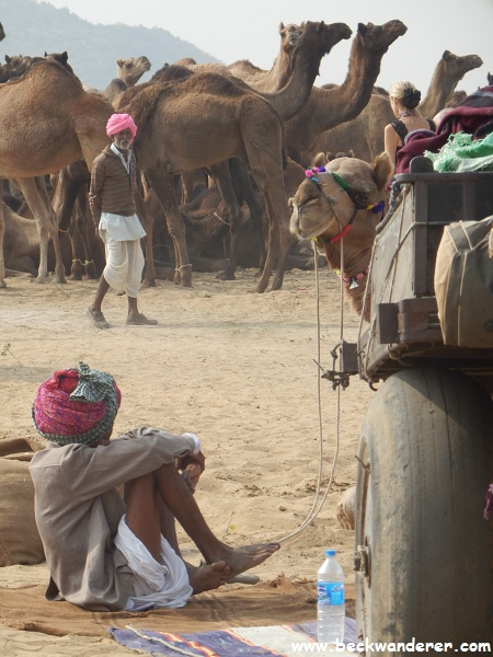 Pushkar camel owner with camel putting its head around cart