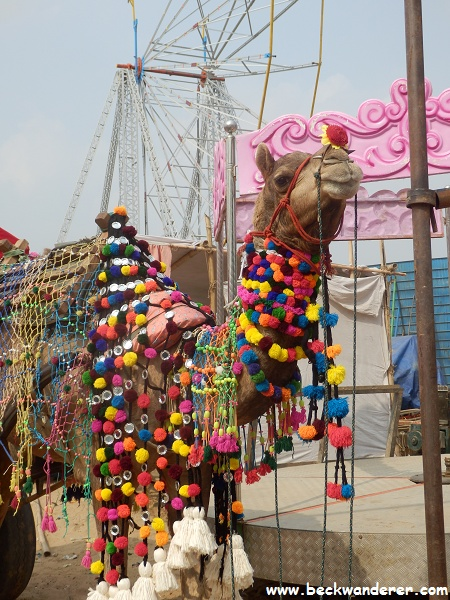 Pushkar Camel Decorated