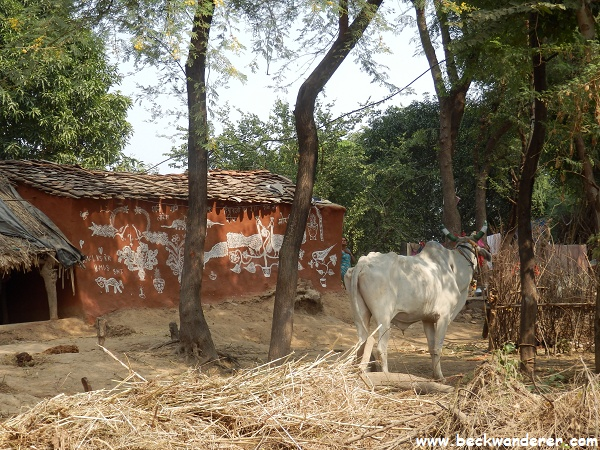 Ranthambhore Village, cow outside a red painted house