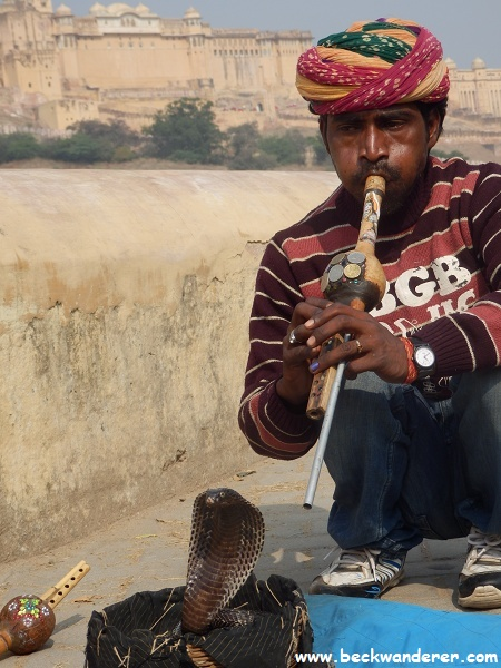Snake charmer with cobra, Amber Fort in the background