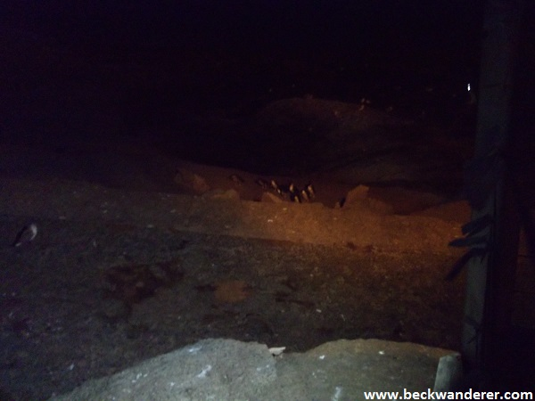 Penguins coming ashore at night on Montague Island