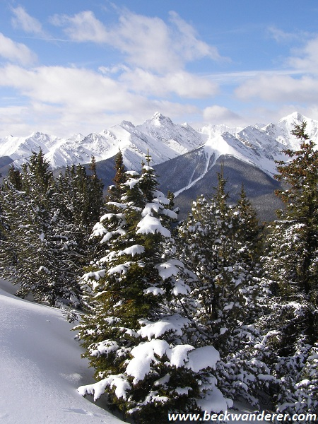 The Rockies and fir trees covered in snow