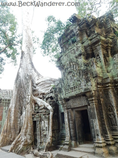 Angkor Jungle / Tomb Raider Templed