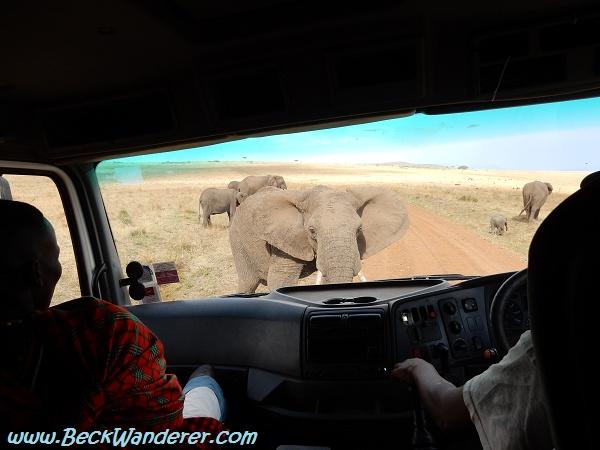 Elephants walk in front of the truck, Maasai Mara