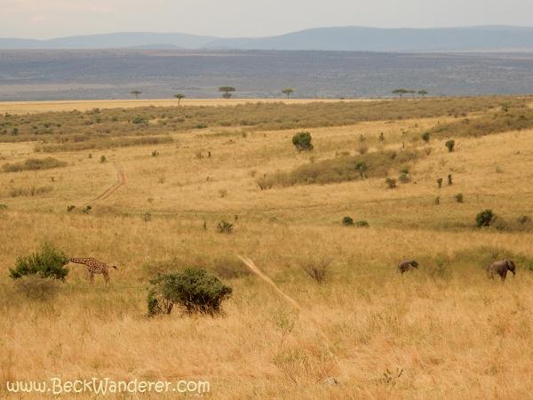 The savannah with a giraffe and 2 elephants